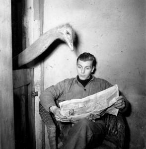 Ostrich reading newspaper